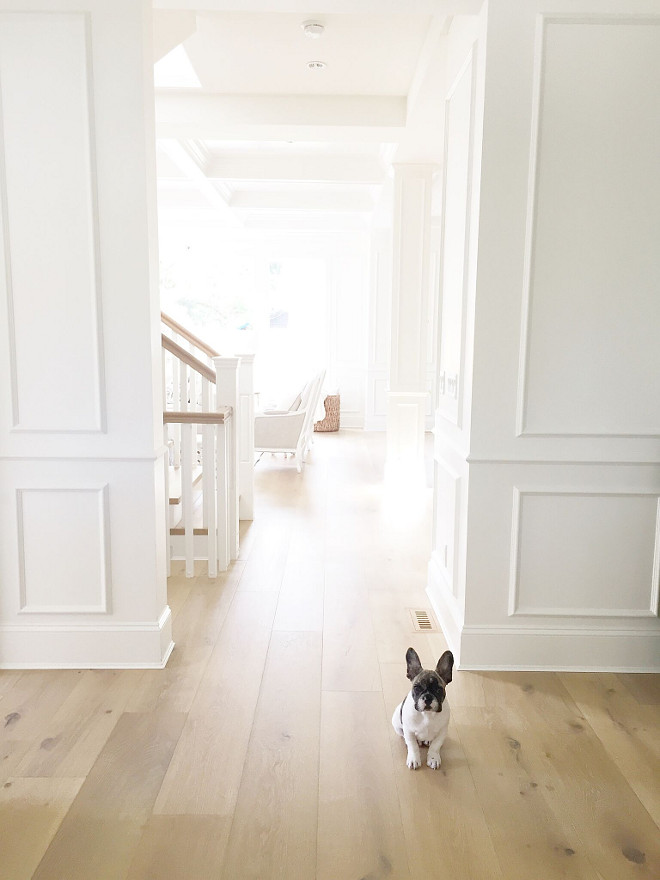 Benjamin Moore Color of the Year 2016 - Simply white walls and french bulldog