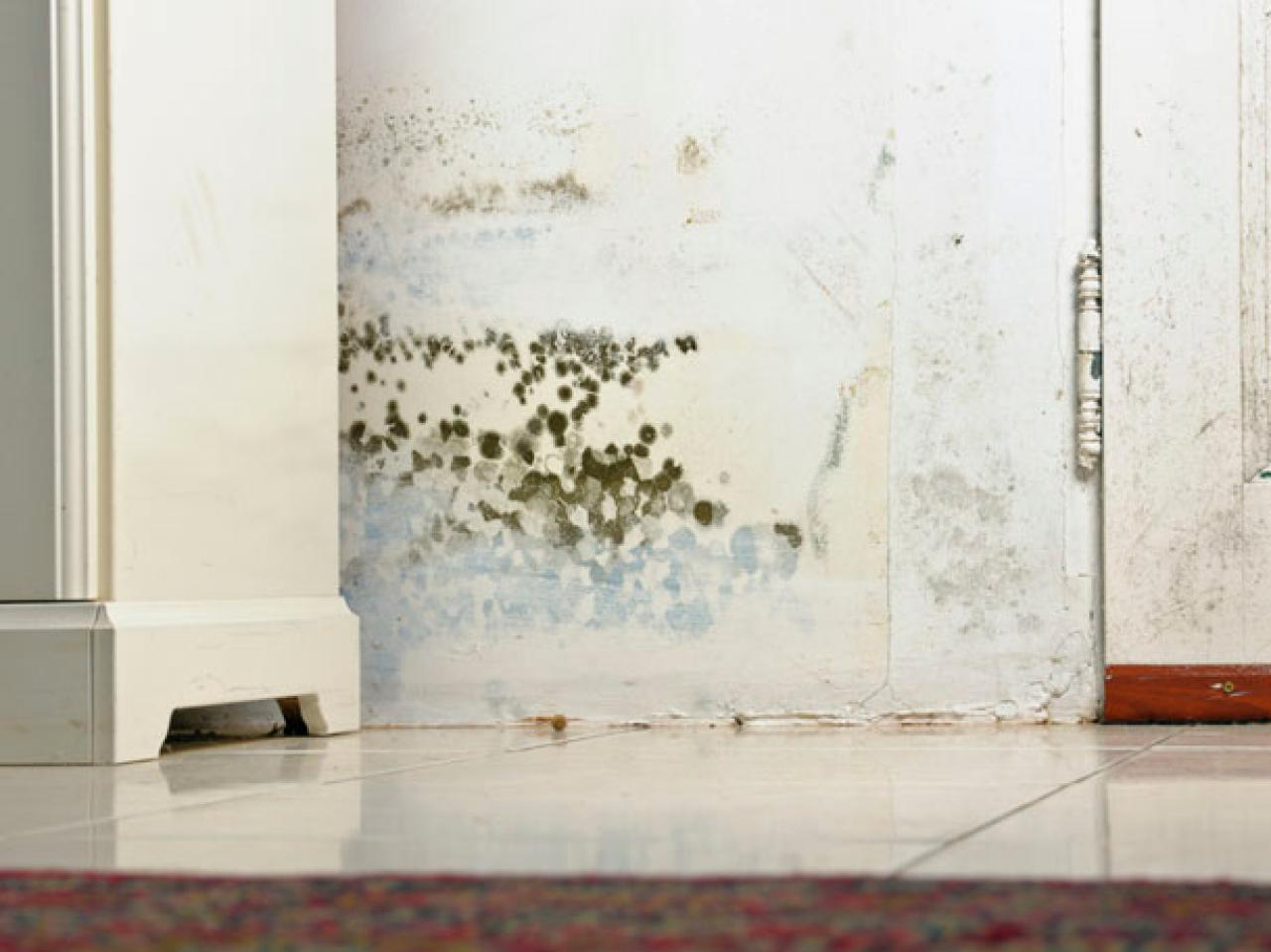 Mold trend in Florida