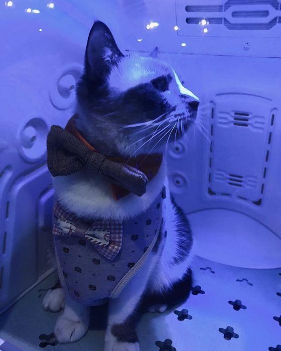 Pepe the Pet Dryer